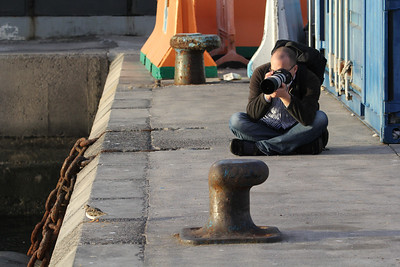Kees Jan photographing Arenaria interpres - steenloper in Dutch - port of Los Cristianos, Tenerife