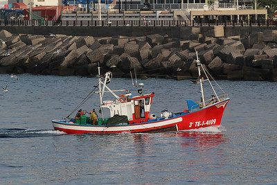 Larus cachinnans, Geelpootmeeuw in Dutch (Los Cristianos Ferry Port, Tenerife)